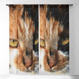 Tortoiseshell and White Calico Cat Blackout Curtain