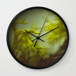 Lichen (moss) in a fog Wall Clock