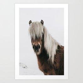 Icelandic Horse - Pony Photo Art Print