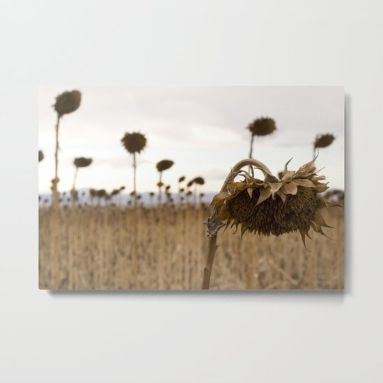 Mourning Field  Metal Print