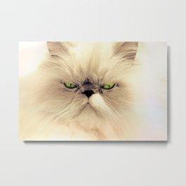 Angry Cat Metal Print