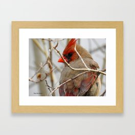 Backyard buddies Framed Art Print