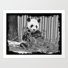 Panda Bear Cutie Art Print