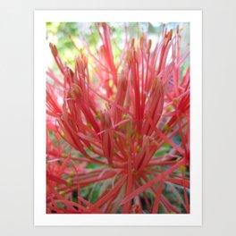 Blood Lily Art Print