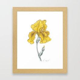 iris 02 Botanical Flower * Yellow Bearded Iris Framed Art Print