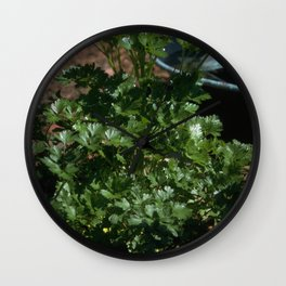 Italian Parsley - Petroselinum crispum var. neapolitanum Wall Clock