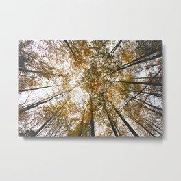 Looking Up at Mammoth Cave National Park Metal Print