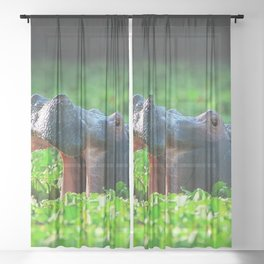 Magnificent Impressive African Hippo Yawning Ultra HD Sheer Curtain