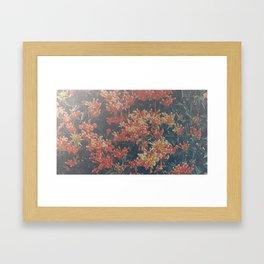 floral print orange Framed Art Print