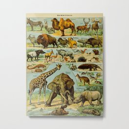 Mammiferes-Mammals Vintage Scientific Illustration French Language Encyclopedia Lithographs Metal Print