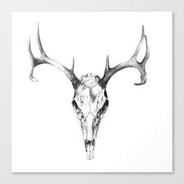 Deer Skull in Pencil Canvas Print