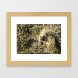 Cuddly Cute but Sharp Like a Needle Framed Art Print