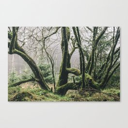 - Natural Green Life - Canvas Print