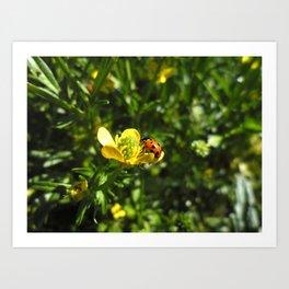 Ladybug crawling around Art Print