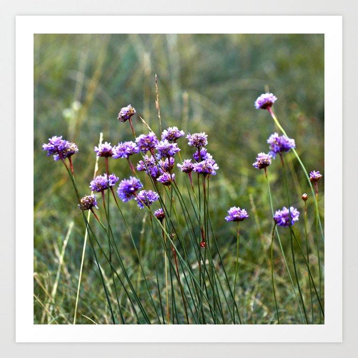 Purple Summer Meadow Art Print