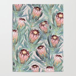 Pale Painted Protea Neriifolia Poster