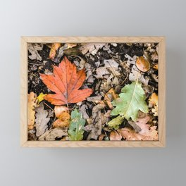 Autumnal leaves on the ground Framed Mini Art Print