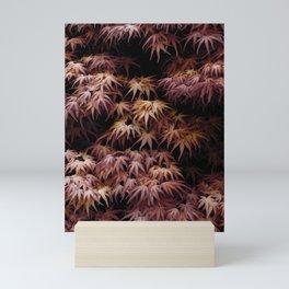 Japanese Maple, Acer Palmatum Seigen Mini Art Print
