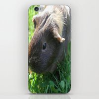 guinea pig iPhone & iPod Skins featuring Guinea Pig by Rose&BumbleBee