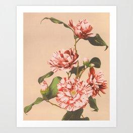 Ogawa Kazumasa - Striped Camellias Art Print