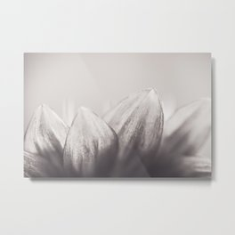Sunflower Study in Black and White Metal Print