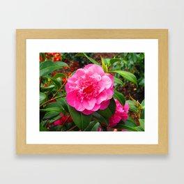 Flower at Blarney Castle Framed Art Print