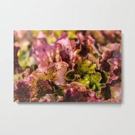 Speckled Lettuce Closeup Metal Print