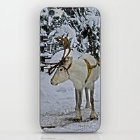 finland iPhone & iPod Skins featuring Reindeer in Lapland Finland by Guna Andersone & Mario Raats - G&M Studi