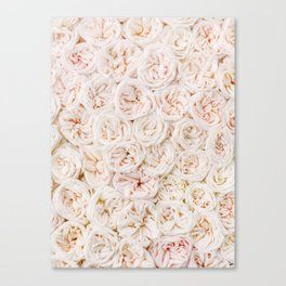 Ivory Rose Canvas Print