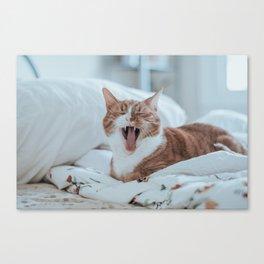 Yelling Cat Canvas Print