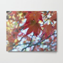 red maple leaves and bokeh Metal Print
