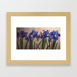 Vintage Irisis Framed Art Print