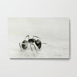 Drunken Ant Metal Print