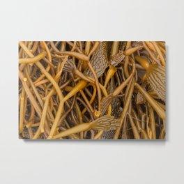 Kelps Metal Print