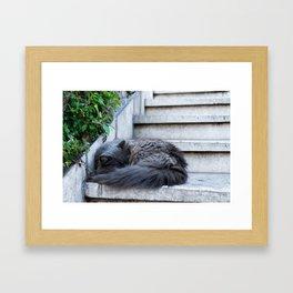 Ash Cat. Framed Art Print