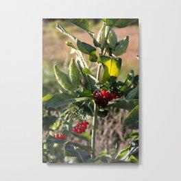Milk weed and red berries Metal Print