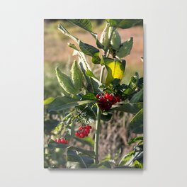 Milk weed and red berries Metal Print
