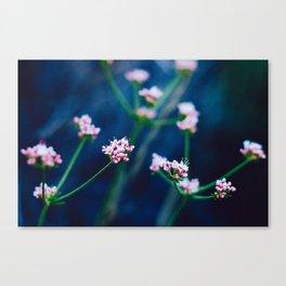 Matilija Falls Flowers Canvas Print