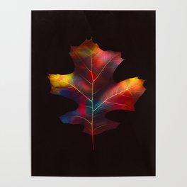 Rainbow Leaf Poster