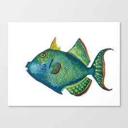 Trigger fish Canvas Print