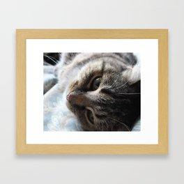 Glamourous Cat Framed Art Print