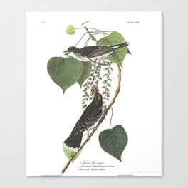 Tyrant fly catcher, Birds of America, Audubon Plate 79 Canvas Print