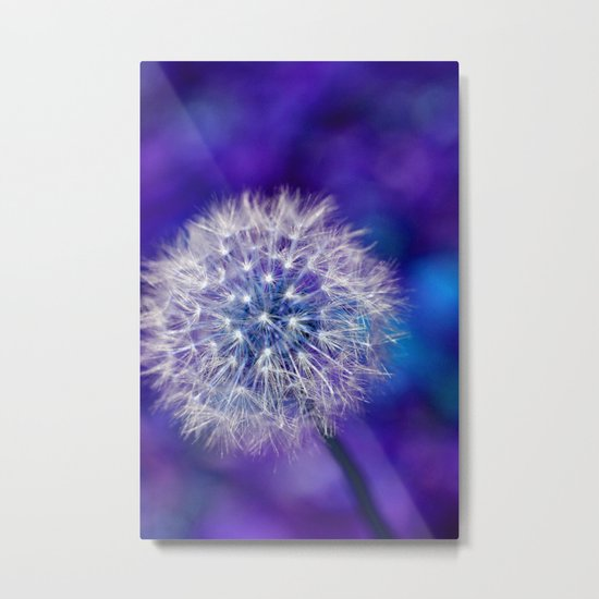 dandelion edit Metal Print