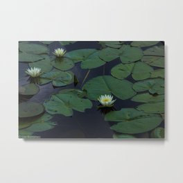 White Lilly Pads  Metal Print