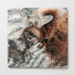 Sable marten hunting by dogs  Metal Print