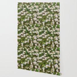 Daisies In Spring Wallpaper