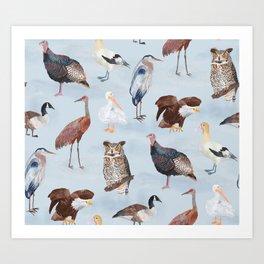 North American Birds Art Print