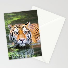 Tiger | Tigre Stationery Cards