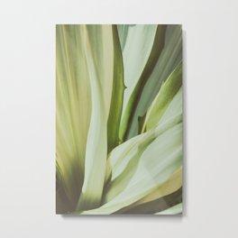 Tropical garden Metal Print