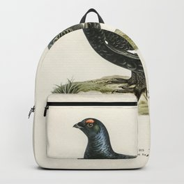 Black grouse (Lyrurus tetrix) illustrated by the von Wright brothers Backpack